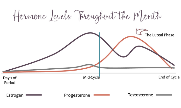 The Menstrual Cycle Part 4: The Luteal Phase